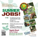 YAP Summer Work & Learn
