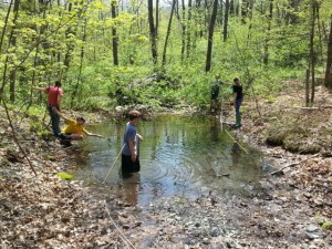 FS14 Vernal pool