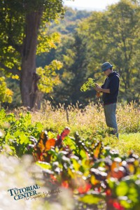 Bennington College intern Sam Lawson harvest carrots at The Tutorial Center's YAP Farm at Hiland Hall in North Bennington.