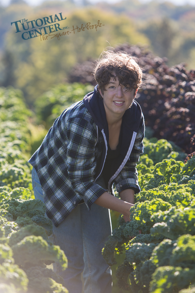 Sylvia, a Bennington College YAP intern, harvesting kale at The Tutorial Center's YAP Farm at Hiland Hall in North Bennington.